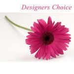 Designers Choice  Artistic Creation