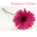 Designers Choice  Artistic Creation