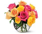 Multi Color Roses