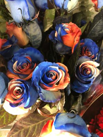 Multi Color Roses Roses