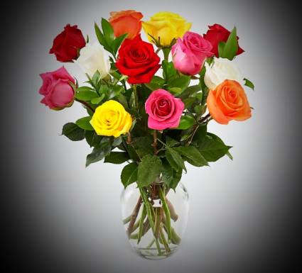 Multicolor Mix color roses