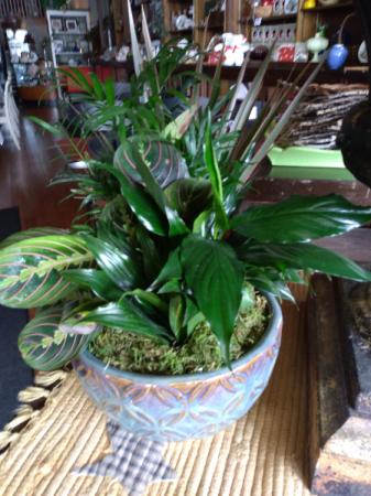 Multiple Plant Sympathy Dish Garden in Ceramic Sympathy Plant