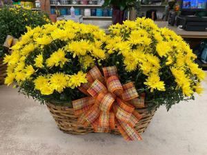 Mum Basket Basket of Mums in Oakland, MD | GREEN ACRES FLOWER BASKET