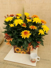 Mums and Sunflowers Blooming Plant