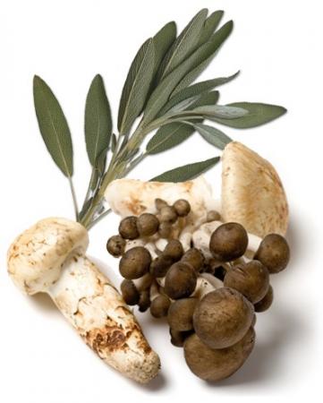 Mushroom & Sage Infused Olive Oil