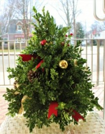 BOXWOOD CHRISTMAS TREE ***LOCAL DELIVERY ONLY***