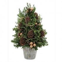 Boxwood Supreme Plant