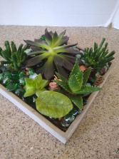 Mystical Succulent garden Various succulents in a unusual container