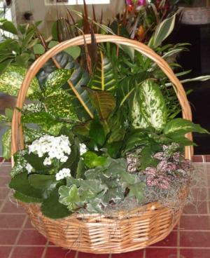 Narural Beauty  Euro Garden in Montgomery, NY | MONTGOMERY FLORIST
