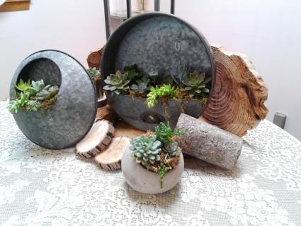 Natural Elements Wall Art Succulent Plants