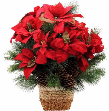 Natural Poinsettia Plant