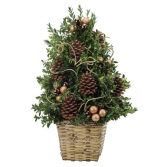 Natural Wonder Small Boxwood tree
