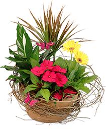 Naturally Beautiful Flowering Plants