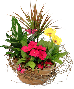 Naturally Beautiful Flowering Plants in Newport, ME | Blooming Barn Florist Gifts & Home Decor