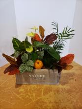 Nature Crate  Planter
