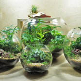 Nature In Doors Terrarium
