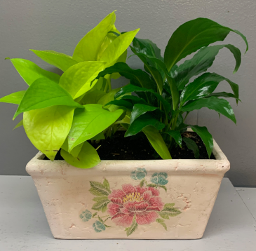 Neon Pothos and Peace lily in keepsake planter