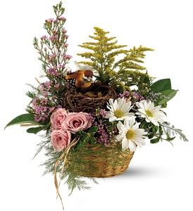 Nesting Basket  in Presque Isle, ME | COOK FLORIST, INC.
