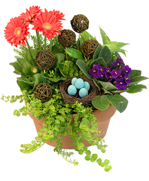 Nesting Blooms Flowering Plants in Ozone Park, NY | Heavenly Florist