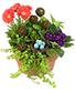 Nesting Blooms Flowering Plants
