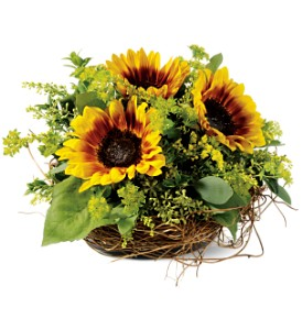 Nesting Sunflowers TFWEB41