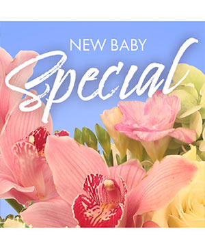 New Baby Favorite Designer's Choice in Kensington, MD | Petals To The Metal Florist LLC