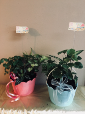 New baby Planter garden