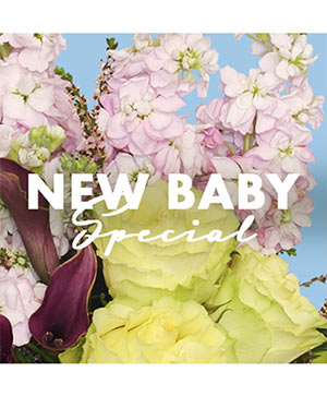 New Baby Special Designer's Choice in Newmarket, ON | FLOWERS 'N THINGS FLOWER & GIFT SHOP
