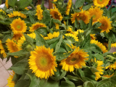 NJ LOCAL SUNFLOWERS AVAILABLE WHILE SUPPLIES LAST