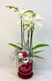 Noel Lantern With Orchid Plant