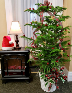 Norfolk Christmas  in Springfield, IL | FLOWERS BY MARY LOU INC