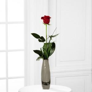 Not for Long Rose
