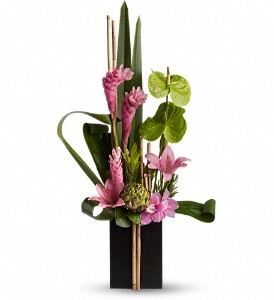 Now and Zen Tropical in Coral Springs, FL | DARBY'S FLORIST