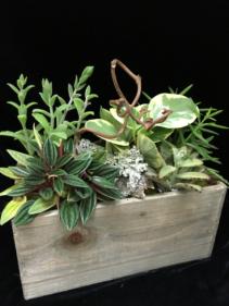 Nurture Planter