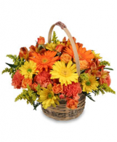 Harvest colorful basket Fall Baskrt