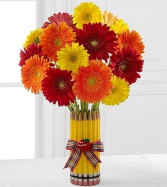 Teachers Pet Gerberas