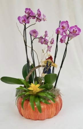 Ochids' Harvest potted plants in Coral Springs, FL | Hearts & Flowers of Coral Springs
