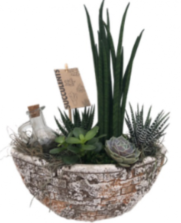 Old Rubble SUCCULENT BOAT