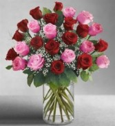 24 ROSES  RED AND PINK IN A VASE RED AND PINK ROSES  2 DOZEN