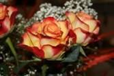 One Dozen BI-COLOR Rose Bokay Wrapped
