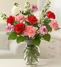 One Dozen Carnations Arranged in a Vase Carnations Are a Traditional Expression of Love And Devotion