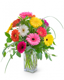 One Dozen Colorful Gerbera Flower Arrangement