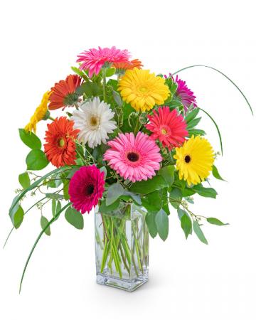 One Dozen Colorful Gerbera Flower Arrangement