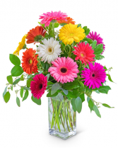 One Dozen Dashing Gerbera Flower Arrangement