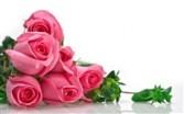 One Dozen HOT PINK Rose Bokay Wrapped