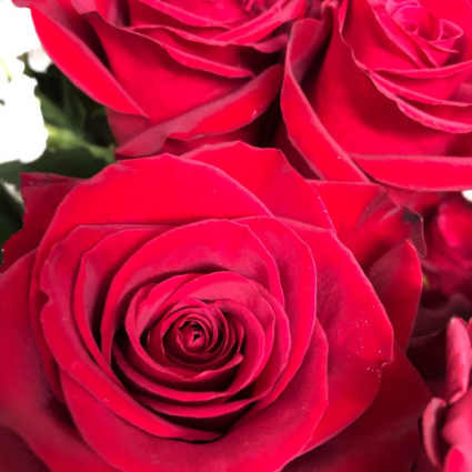One Dozen Red Roses Wrapped