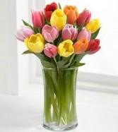 One Dozen Tulips  Vase