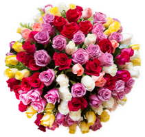 One hundred mixed feelings 100 Mix color Roses GEF014