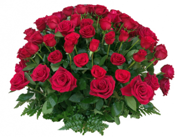One hundred percent red love 100 Wrap red Rose GEF013