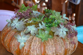 One of a kind pumkins with succulents  Fall